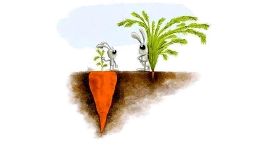 desenho de dois coelhos com cenoura grande e pequena